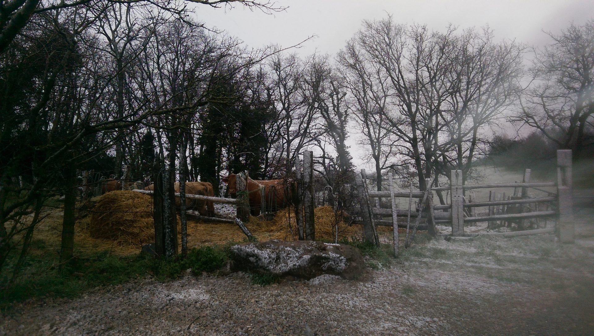 Neige et blizzard - Crédit photo izart.fr