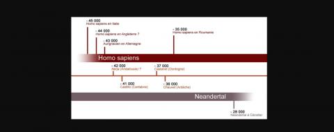 Homo Sapiens et Néandertal