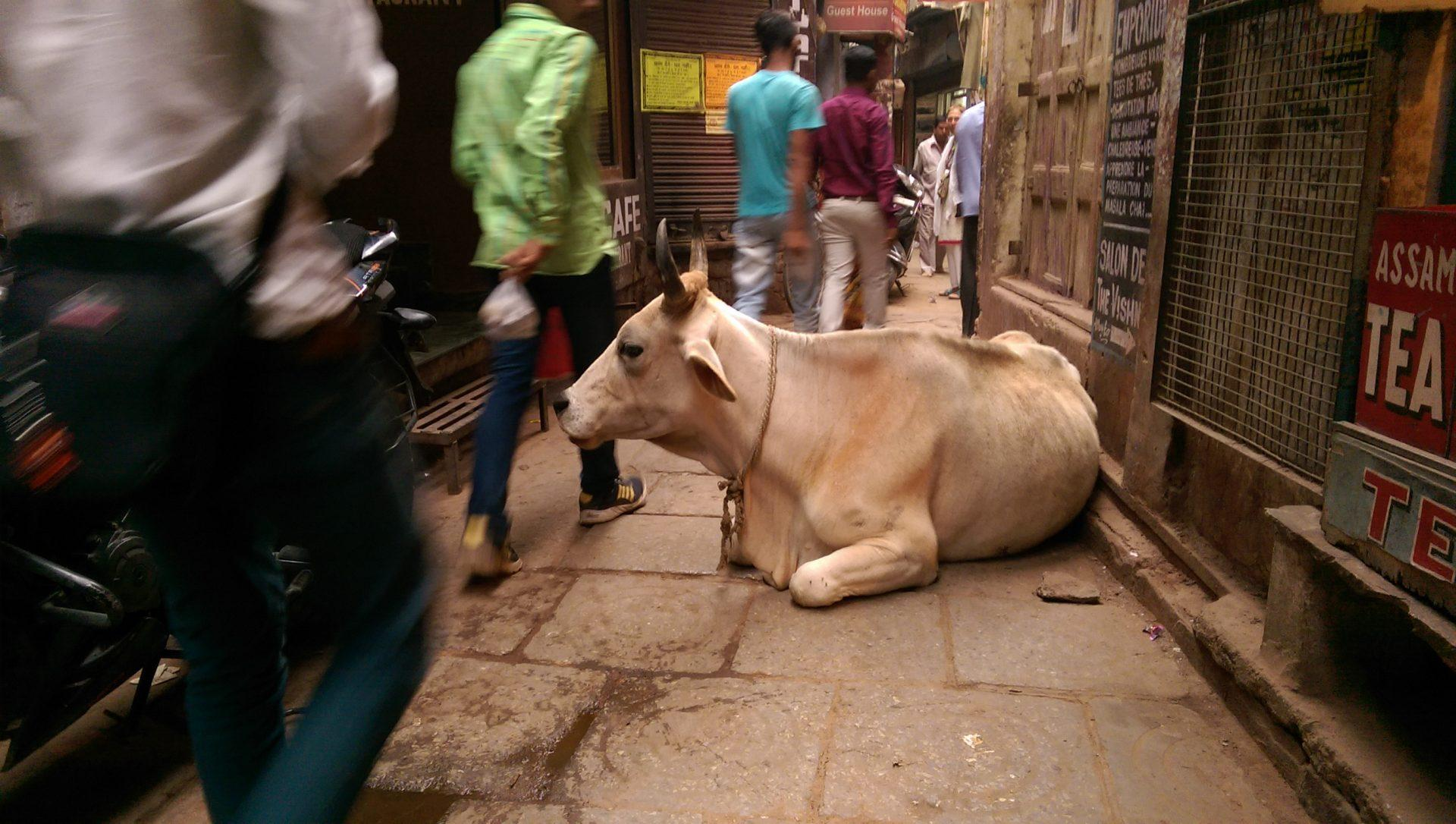 Tuer les moustiques est une expression indienne - Crédit photo izart.fr